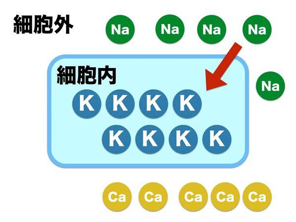依存 性 ナトリウム チャネル 電位